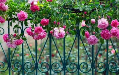 The Most Beautiful Rose Gardens In World Photo