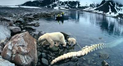 Climate Change: Arctic ice may disapprear by 2040, alarm scientists