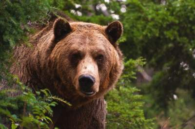 Quick-Thinking Boy Saves Family From Charging Bear