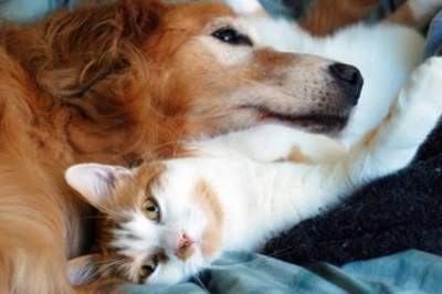 Study Reveals Shocking Enviromental Impact Of Feeding Meat To Cats And Dogs