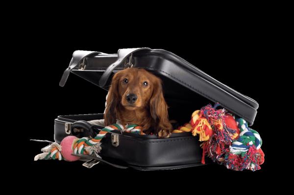 Путешествия с домашними животными - какие документы потребуются