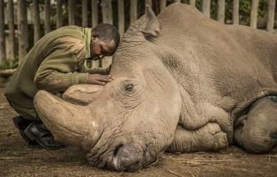 World's last male northern white rhino dies in Kenya sanctuary