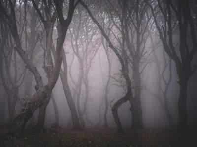 Самые страшные леса в мире. Фото