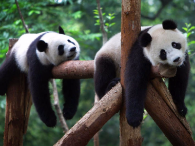 New research suggests evolution might favour 'survival of the laziest'