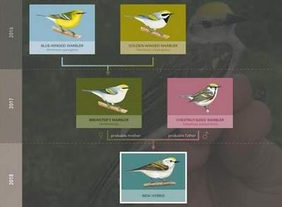 Ученые нашли необычную птицу