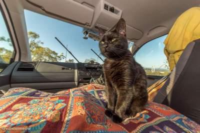 Житель Австралии вместе с кошкой колесит по всему континенту. Фото