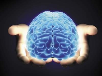 Названы самые полезные продукты для активизации работы мозга