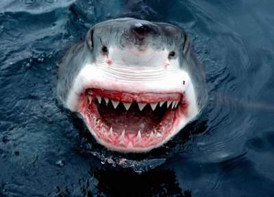 Debunked popular myths about sharks. Photo